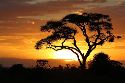 Fotoalbum von Malindi.info - Safari Tsavo/East und Amboseli Dezember 2012[ Foto 118 von 145 ]
