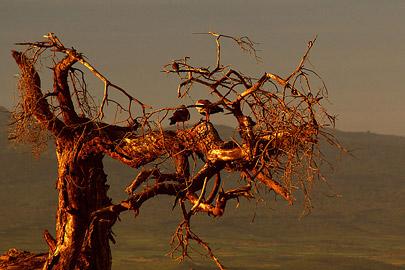 Fotoalbum von Malindi.info - Safari Tsavo/East und Amboseli Dezember 2012[ Foto 128 von 145 ]