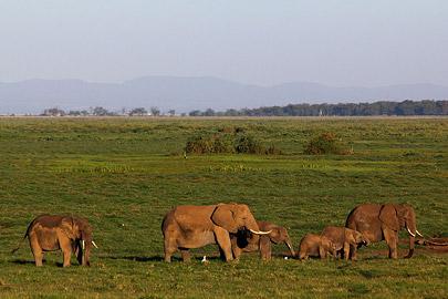 Fotoalbum von Malindi.info - Safari Tsavo/East und Amboseli Dezember 2012[ Foto 129 von 145 ]