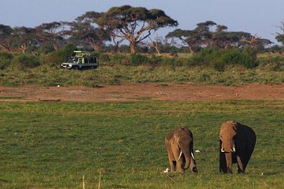 Fotoalbum von Malindi.info - Safari Tsavo/East und Amboseli Dezember 2012[ Foto 130 von 145 ]
