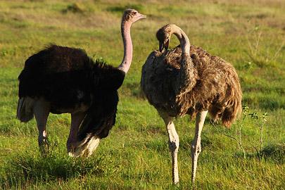 Fotoalbum von Malindi.info - Safari Tsavo/East und Amboseli Dezember 2012[ Foto 131 von 145 ]