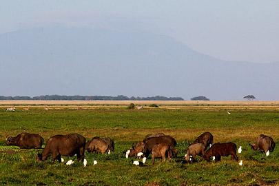 Fotoalbum von Malindi.info - Safari Tsavo/East und Amboseli Dezember 2012[ Foto 133 von 145 ]
