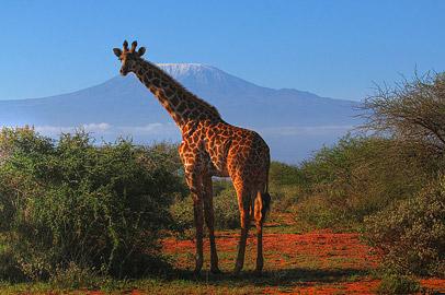 Fotoalbum von Malindi.info - Safari Tsavo/East und Amboseli Dezember 2012[ Foto 135 von 145 ]