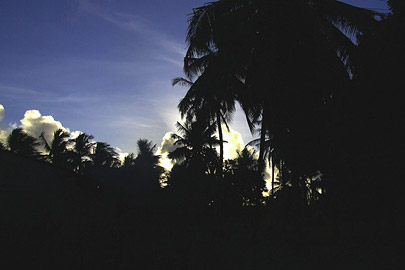 Fotoalbum von Malindi.info - Malindi, Watamu & Robinson Island März 2013[ Foto 17 von 70 ]