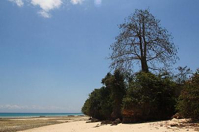 Fotoalbum von Malindi.info - Trip nach Zanzibar - September 2013[ Foto 10 von 212 ]
