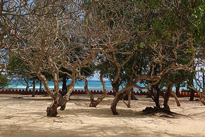 Fotoalbum von Malindi.info - Trip nach Zanzibar - September 2013[ Foto 25 von 212 ]