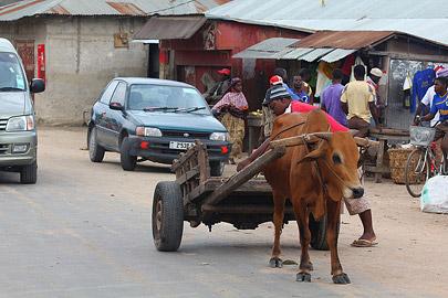 Fotoalbum von Malindi.info - Trip nach Zanzibar - September 2013[ Foto 141 von 212 ]