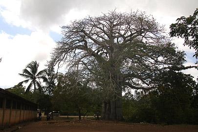 Fotoalbum von Malindi.info - Trip nach Zanzibar - September 2013[ Foto 150 von 212 ]