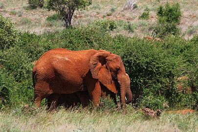Fotoalbum von Malindi.info - Safari Tsavo East im April 2015[ Foto 3 von 66 ]