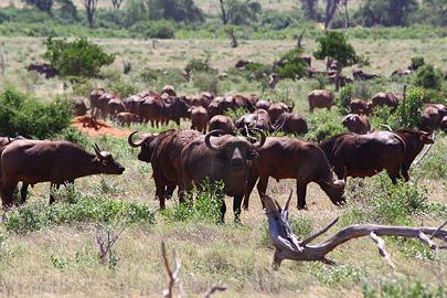 Fotoalbum von Malindi.info - Safari Tsavo East im April 2015[ Foto 4 von 66 ]