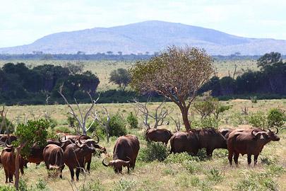 Fotoalbum von Malindi.info - Safari Tsavo East im April 2015[ Foto 5 von 66 ]