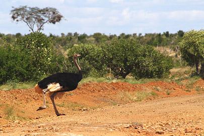 Fotoalbum von Malindi.info - Safari Tsavo East im April 2015[ Foto 7 von 66 ]