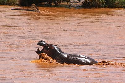 Fotoalbum von Malindi.info - Safari Tsavo East im April 2015[ Foto 9 von 66 ]