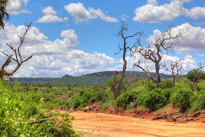 Fotoalbum von Malindi.info - Safari Tsavo East im April 2015[ Foto 14 von 66 ]