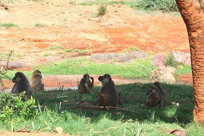 Fotoalbum von Malindi.info - Safari Tsavo East im April 2015[ Foto 29 von 66 ]