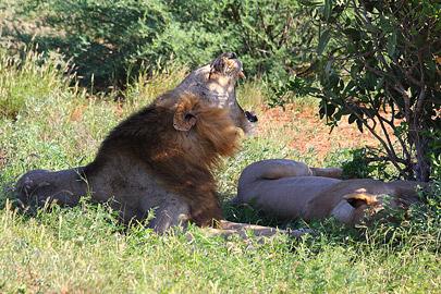 Fotoalbum von Malindi.info - Safari Tsavo East im April 2015[ Foto 33 von 66 ]