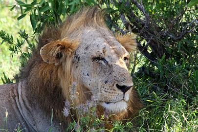 Fotoalbum von Malindi.info - Safari Tsavo East im April 2015[ Foto 38 von 66 ]