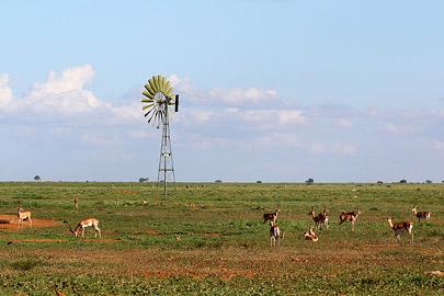 Fotoalbum von Malindi.info - Safari Tsavo East im April 2015[ Foto 40 von 66 ]