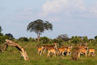 Fotoalbum von Malindi.info - Safari Tsavo East im April 2015[ Foto 41 von 66 ]
