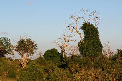 Fotoalbum von Malindi.info - Safari Tsavo East im April 2015[ Foto 45 von 66 ]