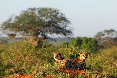 Fotoalbum von Malindi.info - Safari Tsavo East im April 2015[ Foto 51 von 66 ]