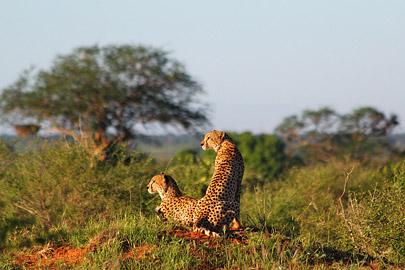 Fotoalbum von Malindi.info - Safari Tsavo East im April 2015[ Foto 52 von 66 ]