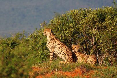 Fotoalbum von Malindi.info - Safari Tsavo East im April 2015[ Foto 53 von 66 ]