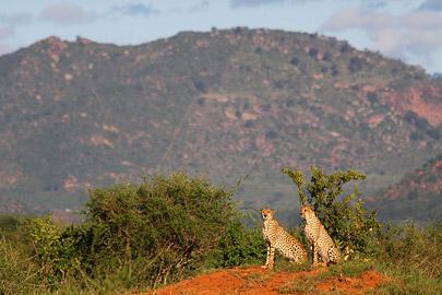 Fotoalbum von Malindi.info - Safari Tsavo East im April 2015[ Foto 54 von 66 ]