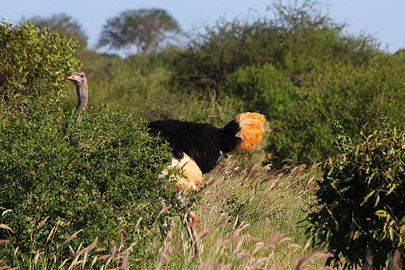 Fotoalbum von Malindi.info - Safari Tsavo East im April 2015[ Foto 60 von 66 ]