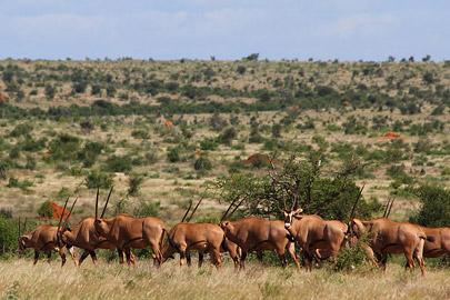 Fotoalbum von Malindi.info - Safari Tsavo East im April 2015[ Foto 61 von 66 ]