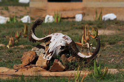 Fotoalbum von Malindi.info - Safari Tsavo East im April 2015[ Foto 62 von 66 ]