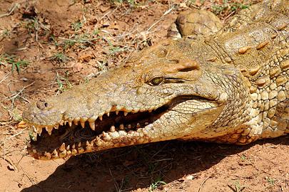 Fotoalbum von Malindi.info - Safari Tsavo East im April 2015[ Foto 65 von 66 ]
