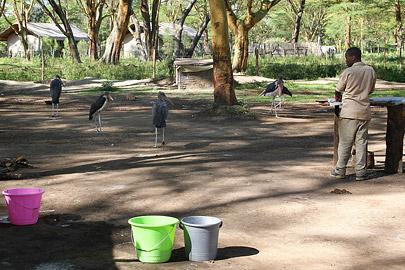 Fotoalbum von Malindi.info - Lakes Naivasha, Baringo & Nakuru 2016[ Foto 1 von 95 ]