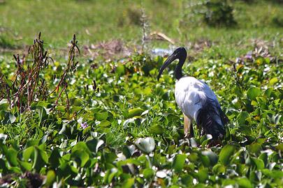 Fotoalbum von Malindi.info - Lakes Naivasha, Baringo & Nakuru 2016[ Foto 18 von 95 ]