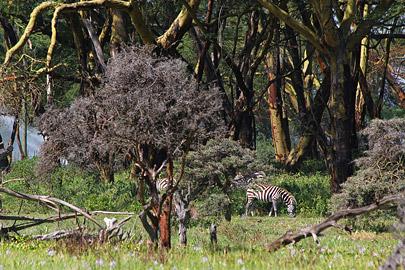 Fotoalbum von Malindi.info - Lakes Naivasha, Baringo & Nakuru 2016[ Foto 35 von 95 ]