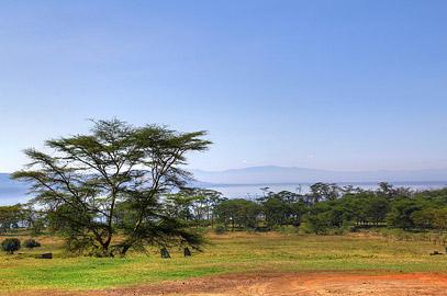 Fotoalbum von Malindi.info - Lakes Naivasha, Baringo & Nakuru 2016[ Foto 64 von 95 ]