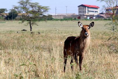 Fotoalbum von Malindi.info - Lakes Naivasha, Baringo & Nakuru 2016[ Foto 65 von 95 ]