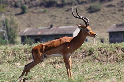 Fotoalbum von Malindi.info - Lakes Naivasha, Baringo & Nakuru 2016[ Foto 66 von 95 ]