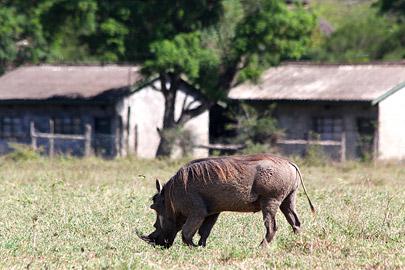 Fotoalbum von Malindi.info - Lakes Naivasha, Baringo & Nakuru 2016[ Foto 67 von 95 ]