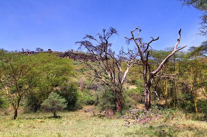 Fotoalbum von Malindi.info - Lakes Naivasha, Baringo & Nakuru 2016[ Foto 71 von 95 ]