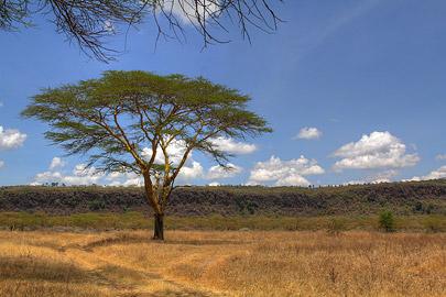 Fotoalbum von Malindi.info - Lakes Naivasha, Baringo & Nakuru 2016[ Foto 75 von 95 ]