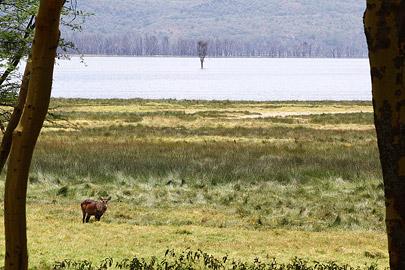 Fotoalbum von Malindi.info - Lakes Naivasha, Baringo & Nakuru 2016[ Foto 83 von 95 ]