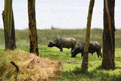 Fotoalbum von Malindi.info - Lakes Naivasha, Baringo & Nakuru 2016[ Foto 84 von 95 ]