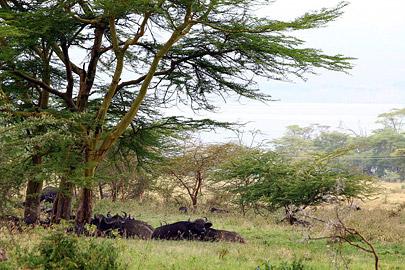 Fotoalbum von Malindi.info - Lakes Naivasha, Baringo & Nakuru 2016[ Foto 90 von 95 ]