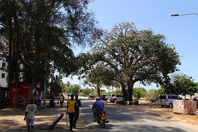 Fotoalbum von Malindi.info - Malindi Fotos vom März 2016[ Foto 64 von 130 ]
