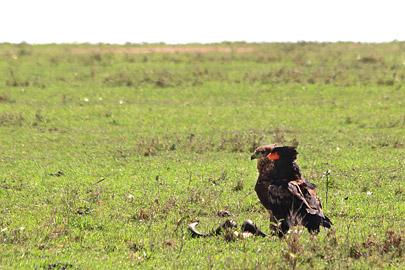 Fotoalbum von Malindi.info - 3 Tage Safari Maasai Mara 2017 [ Foto 5 von 104 ]