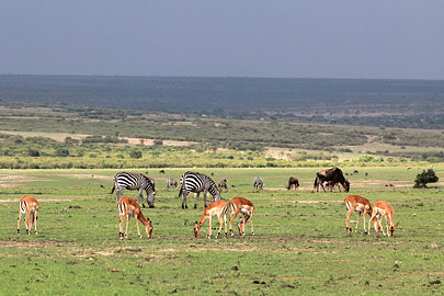 Fotoalbum von Malindi.info - 3 Tage Safari Maasai Mara 2017 [ Foto 7 von 104 ]