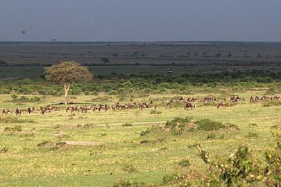 Fotoalbum von Malindi.info - 3 Tage Safari Maasai Mara 2017 [ Foto 17 von 104 ]