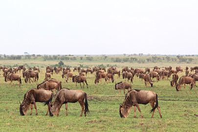 Fotoalbum von Malindi.info - 3 Tage Safari Maasai Mara 2017 [ Foto 18 von 104 ]