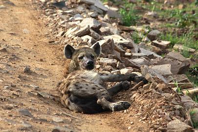 Fotoalbum von Malindi.info - 3 Tage Safari Maasai Mara 2017 [ Foto 19 von 104 ]